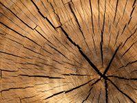 legno10